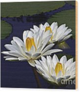 Three White Tropical Water Lilies Version 2 Wood Print