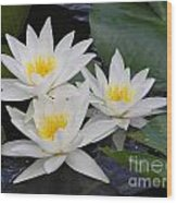 Three White Waterlilies Wood Print