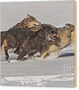 Three Wolves Wood Print