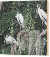 Three Wood Storks Wood Print