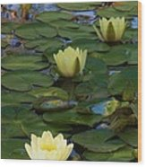Three  Yellow Lilies Wood Print