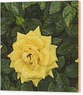 Three Yellow Roses In Rain Wood Print