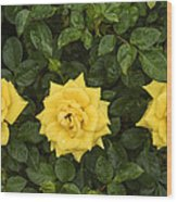 Three Yellow Roses Wood Print