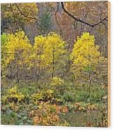 Three Yellow Trees Wood Print