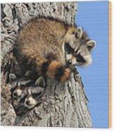 Three Young Raccoons Wood Print