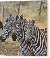 Three Zebras Wood Print
