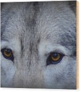 Through A Wolf's Eyes Wood Print