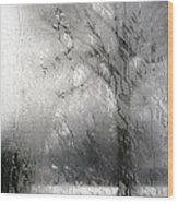 Through Glass -- A Tree In Winter Wood Print