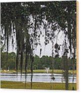 Through Live Oak Tree Wood Print