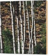 Through The Aspens Wood Print