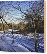 Through The Branches 4 - Central Park - Nyc Wood Print