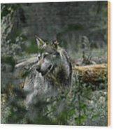 Through The Bushes Wood Print