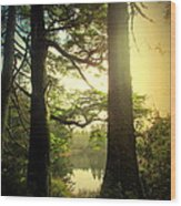 Through The Forest To The Lake Wood Print