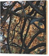 Through The Trees 2 Wood Print