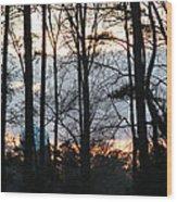 Through The Trees Wood Print by Ella Char