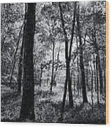 Through The Trees In Black And White Wood Print