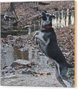 Throwing Stones Wood Print