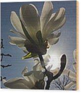 Thru The Flowers Wood Print