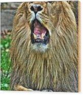 Thunder Vocals Of Lazy Boy At The Buffalo Zoo Wood Print