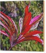 Red Ti Plant Wood Print