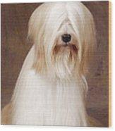 Tibetan Terrier Dog Wood Print