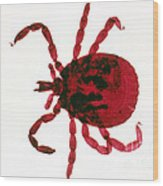 Tick Wood Print by Perennou Nuridsany