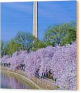 Tidal Basin And Washington Monument With Cherry Blossoms Vertical Wood Print
