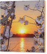 Tidal Basin Sunset With Cherry Blossoms Wood Print
