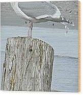 Tide Watcher Wood Print
