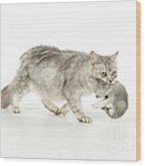 Tiffanie Cat And Kitten Wood Print