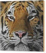 Tiger 1 Wood Print