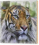 Tiger 26 Wood Print