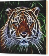 Tiger Abstact Art Wood Print