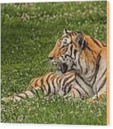 Tiger At Rest 3 Wood Print