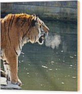 Tiger Breathing Into Cold Air By The Water Wood Print
