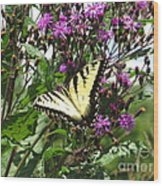 Tiger Butterfly Wood Print