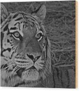 Tiger Bw Wood Print