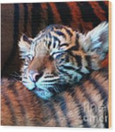Tiger Cub Nap Wood Print