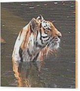 Tiger Getting Wet Wood Print