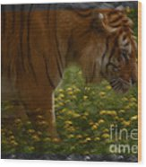 Tiger In The Midst Of Buttercups Wood Print