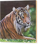 Tiger In The Sun Painting Wood Print