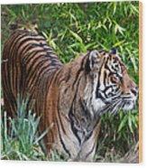 Tiger In The Vast Jungles Wood Print