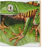 Tiger-legged Monkey Frog Wood Print