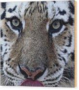 Tiger Lick Wood Print