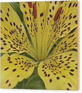 Tiger Lily Wood Print by Gregory Young