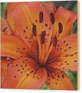 Tiger Lily Wood Print