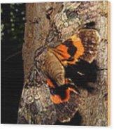 Tiger Moth Flight Wood Print