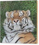 Tiger Nap Time Wood Print