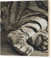 Tiger Paws Wood Print