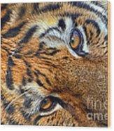 Tiger Peepers Wood Print